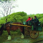 omahonys bed and breakfast jaunting cart